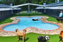doggy day care in st augustine